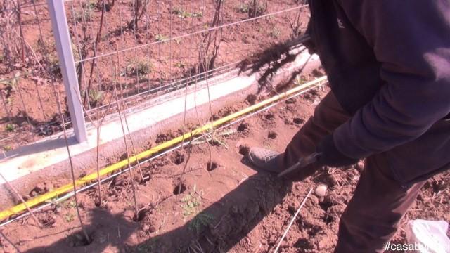Plantarea gardului viu #casabuhnici_1