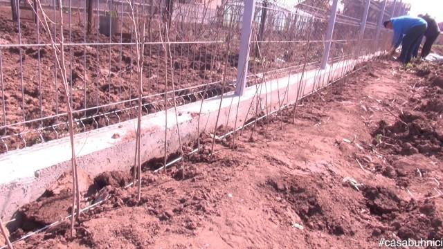 Plantarea gardului viu #casabuhnici_2