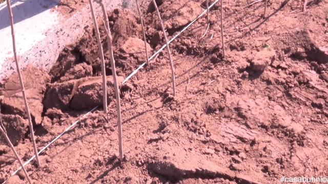 Plantarea gardului viu #casabuhnici_3