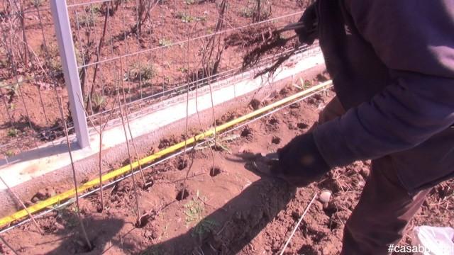 Plantarea gardului viu #casabuhnici_4