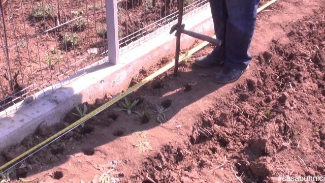 Plantarea gardului viu #casabuhnici_5