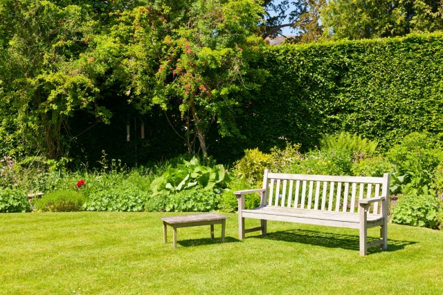 Wooden bench in a summer garden